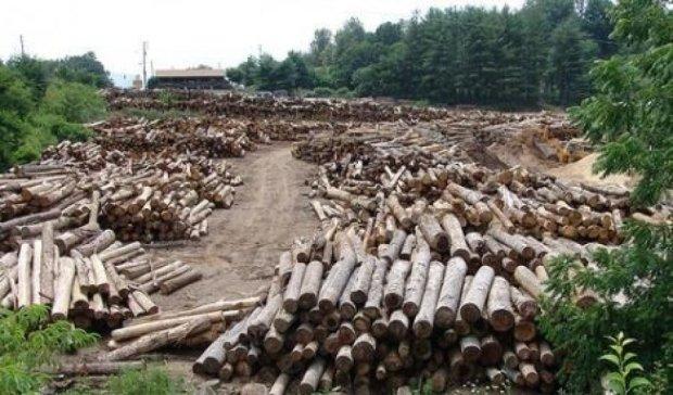 В сети показали масштабную вырубку винницких лесов (ВИДЕО)