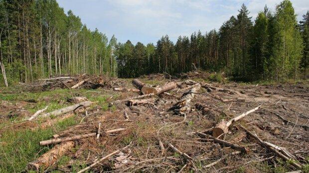Людство опинилося на межі екологічної трагедії через вирубку лісів: як їй запобігти