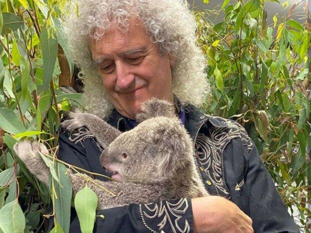 Легендарный гитарист группы Queen вылечил спасенную коалу сольным концертом