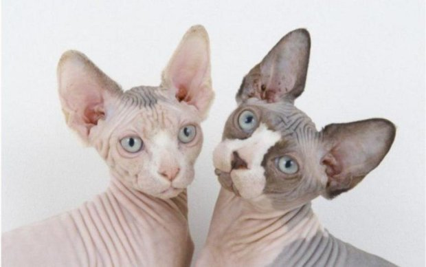 Топ-5 весомых причин завести кошку