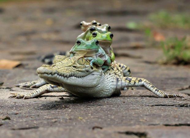 Крокодилы помогли палеонтологам обнаружить неизвестные виды животных: секрет в пищеварении