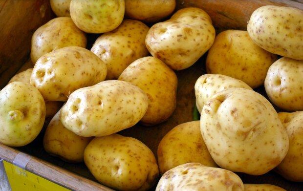Картошка, фото: pixabay.com