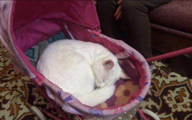 Вбивця мимоволі: кішка позбавила життя маленьку дитину
