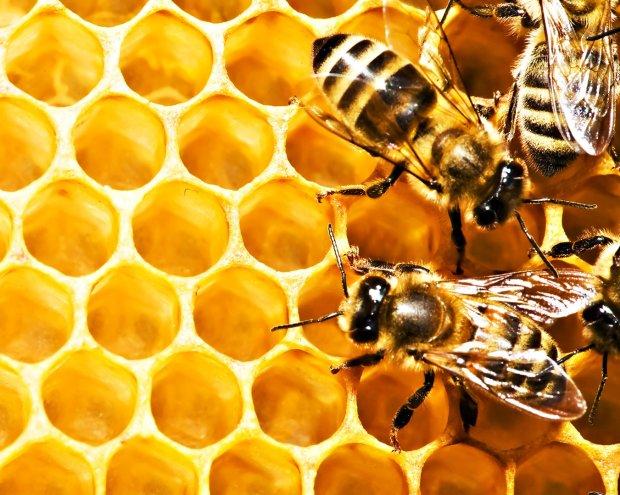 Человечество в опасности из-за вымирания насекомых: готовьтесь к кислородному апокалипсису