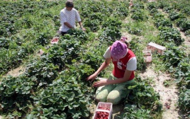Пекло за 600 євро: як українських заробітчан принижують в Польщі