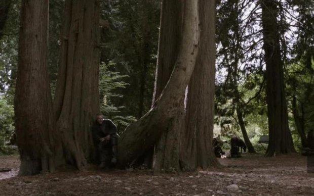 Старейшее в мире: найдено дерево, которое видело викингов