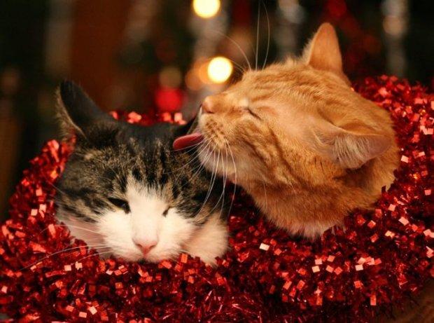 Анекдоты на 28 декабря позволят вам порадовать родных и близких