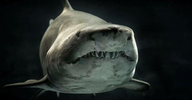Большая хищная пасть: ученые обнаружили голову акулы, которой 330 миллионов лет