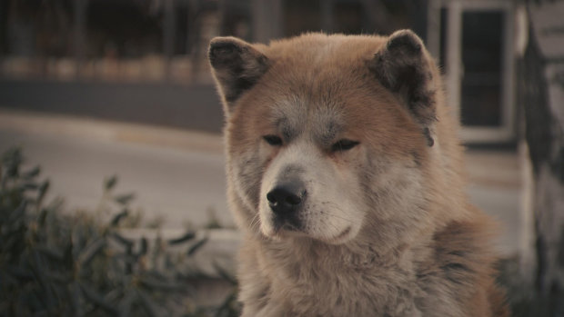 Не отходил ни на шаг: верный пес стал щитом за хозяина, которого уже не вернуть - вот она, настоящая дружба