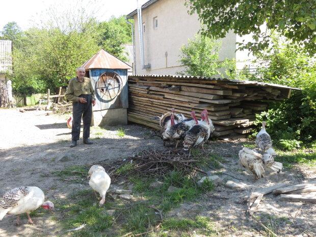 Матюкав сусідських індиків: на Одещині чоловіка відправили до суду через курйозний випадок