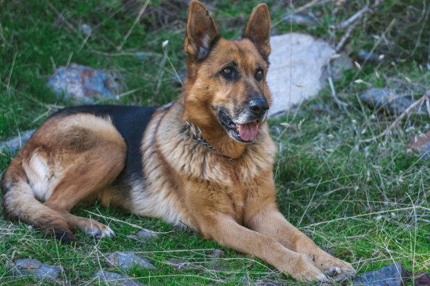 Кинув на вірну загибель у тайзі, але собака дивом врятувалась - тепер живе з несподіваними друзями