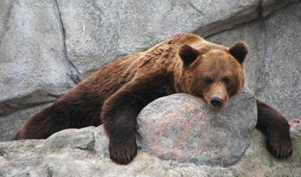 В зоопарке посетители отравили медведя