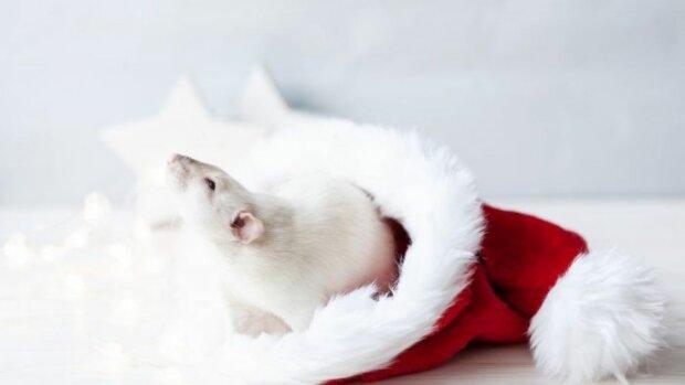 Новый год 2020: как встречать Белую Металлическую Крысу, чтобы заманить богатство и успех