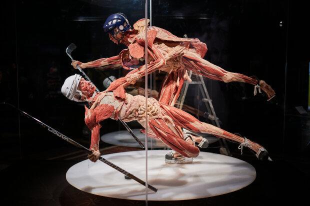 До Києва привезли людські тіла без шкіри: Body Worlds шокує та захоплює, фоторепортаж