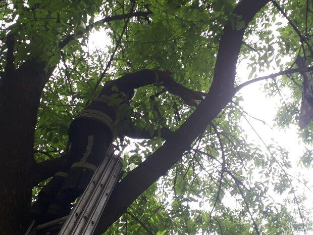 Кот на дереве, фото: ГСЧС