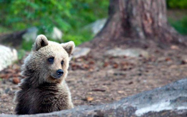 Нічого незвичайного: як ведмідь росіянці на городі допомагав