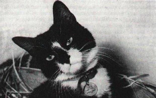 Інцидент на Янцзи: як звичайний кіт Саймон став легендою