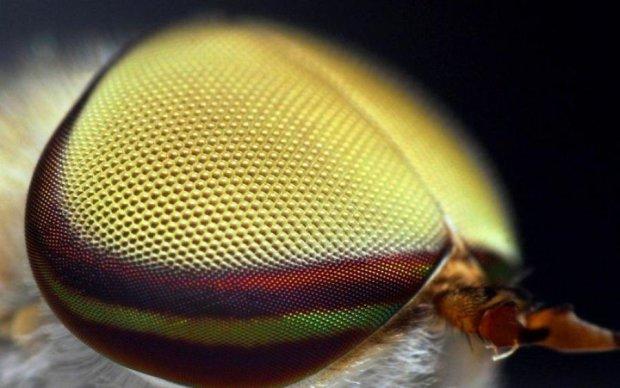 Глаза насекомых помогли создать революционные батареи