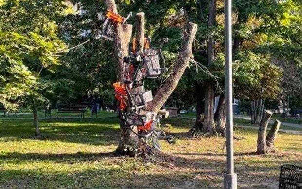 Тележки на дереве, фото: Telegram