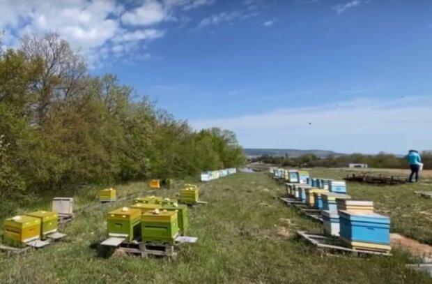 П'яні бджоли вбивають тверезих - на Волині пасічники б'ють на сполох через новачка-бджоляра