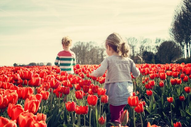 весна, иллюстративное фото: pxhere