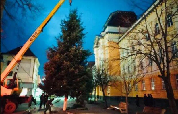 """Закарпатці чекають Нового року і похвалилися пухнастою красунею: """"Перші в Україні"""""""