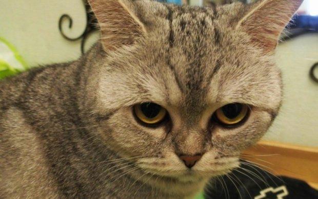 Коти стали жертвами маніяка з бритвою