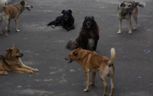 Зграя собак ледь не розірвала українку просто на території лікарні