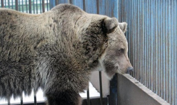 Волонтери створили центр допомоги ведмедям
