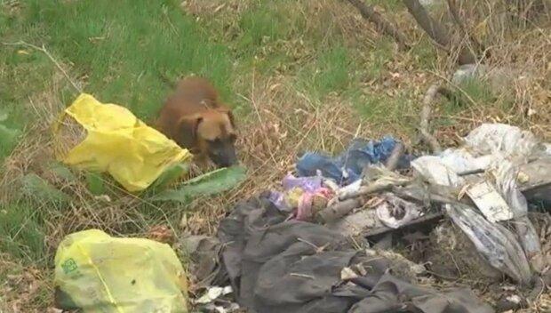 собака / скриншот из видео