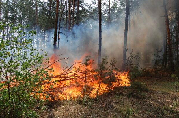 Над Львівщиною нависла смертельна небезпека, рятувальники благають забути про сірники: що потрібно знати