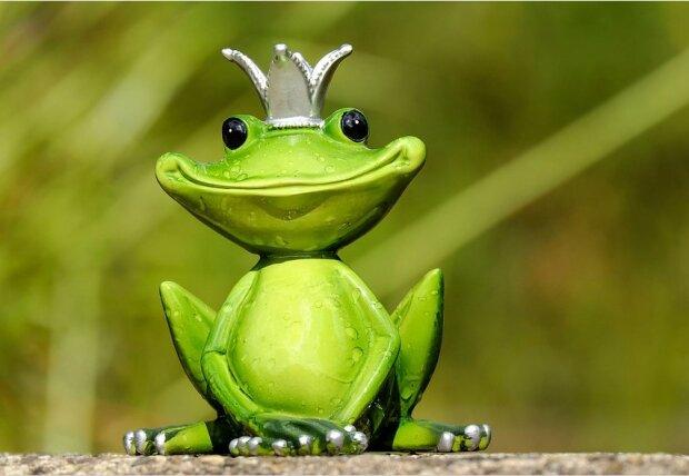 Жаба, фото: Pixabay