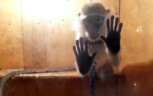 В клетку их! Россияне жестоко поиздевались над животными в зоопарке