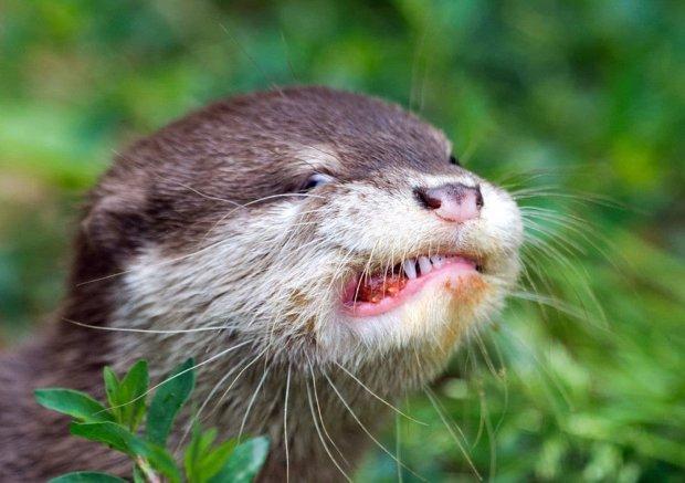 """Сотрудники зоопарка назвали выдру """"пухлявой киской"""". Им пришлось извиниться. Но и за это их раскритиковали"""