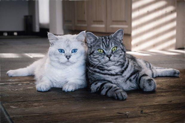 Искусственный интеллект научили рисовать котов: выглядит так себе