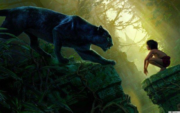 Багира вышел к человеку: зоологи сфотографировали самую редкую кошку на Земле
