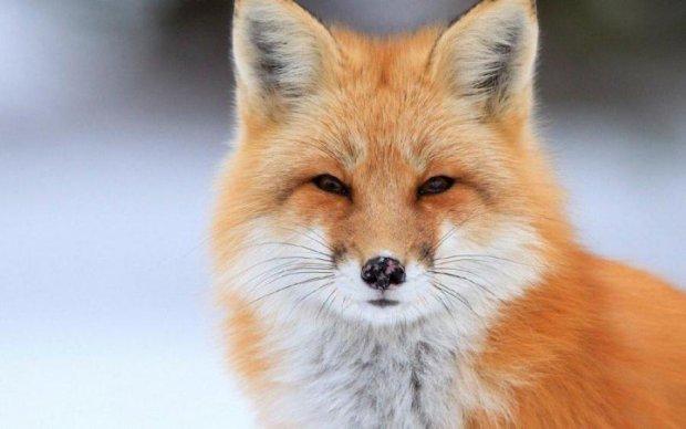 Firefox выпустил убийцу Chrome