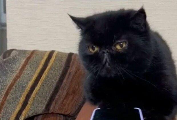 Кошка защитила телефон хозяйки от любопытного мужа: вот она, женская солидарность