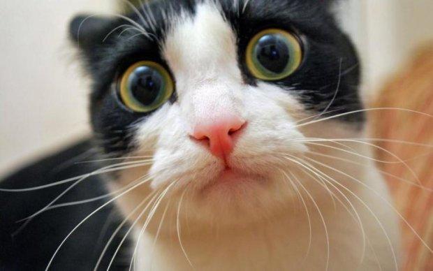 Кіт з дивними лапами став новим улюбленцем інтернету