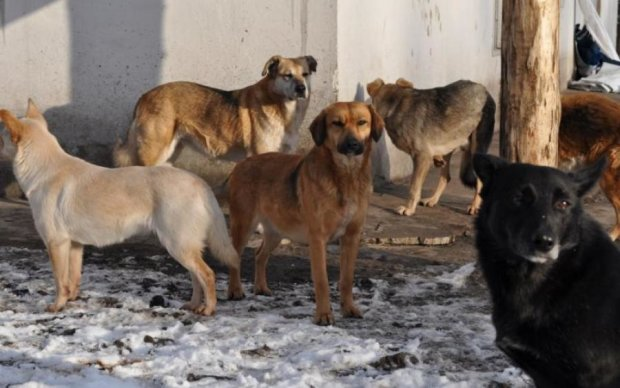 В Киеве собака бросилась на беременную