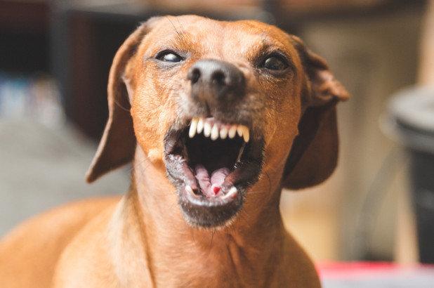 Найгірший друг людини: поїлки для собак містять смертельні інфекції