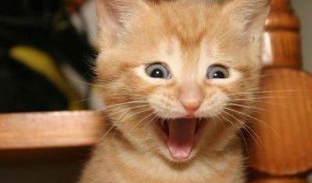 Улыбающиеся котики стали звездами интернета (фото)