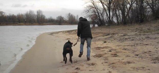 Выгул собаки, фото: скриншот из видео