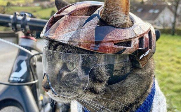 Мурчик на парашуті: сміливий кіт показав світу потужний екстрим і став легендою