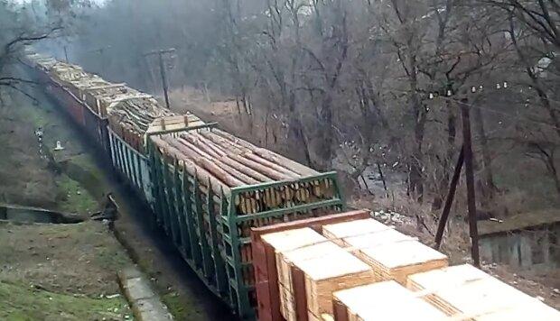 З України продовжують тоннами вивозити ліс — трагедія на Прикарпатті не навчила