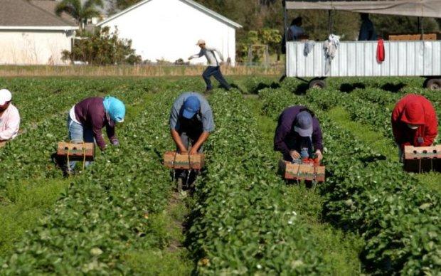 Робота в Польщі: скільки отримують українські заробітчани