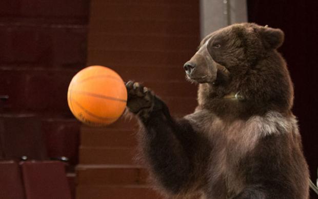 У Білій Церкві величезний ведмідь кинувся на глядачів під час вистави: відео