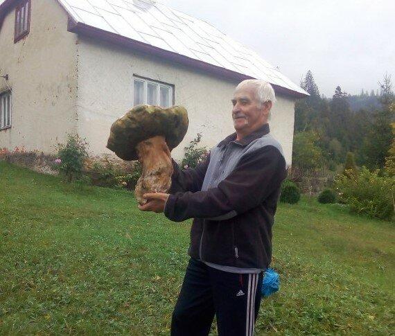 Гриб-великан, фото из Фейсбука