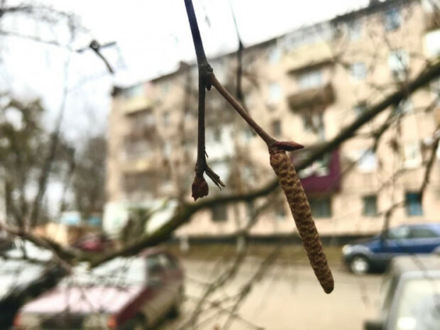 """Люті морози відступлять з Вінниці, стихія порадує легким """"плюсом"""" 9 лютого"""