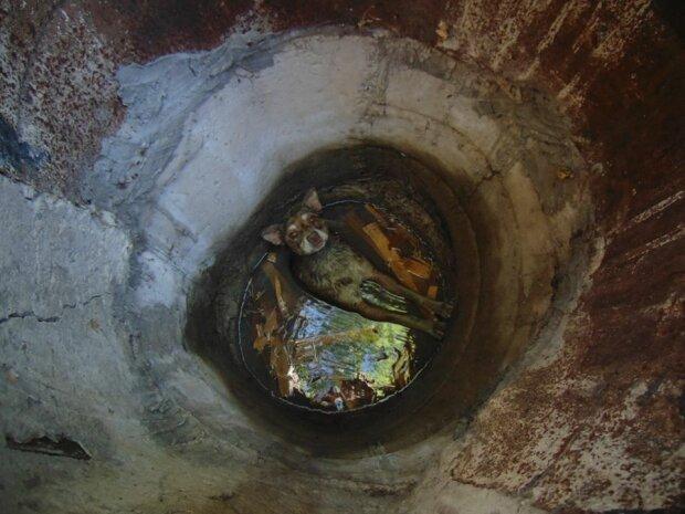 Шкуродери або випадковість? Рятувальники витягли цуценя з лап погибелі в покинутому колодязі